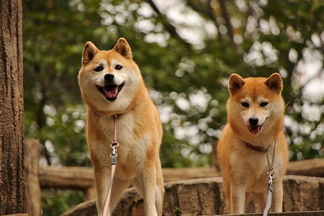 3微妙な微笑み