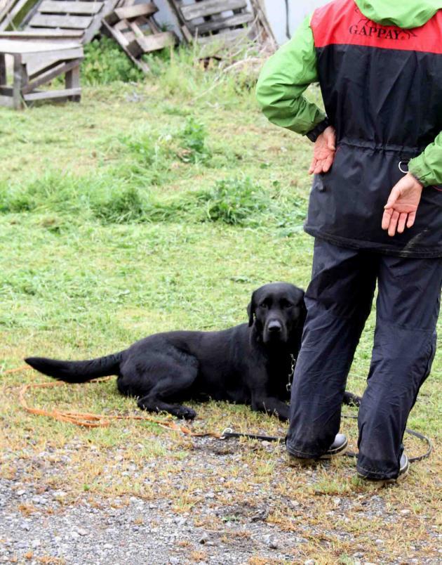 黒い犬(2)