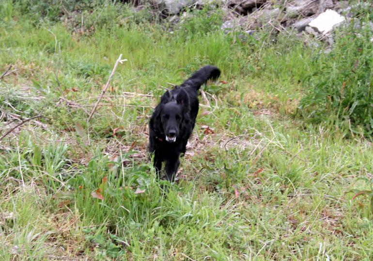 黒い犬(3)