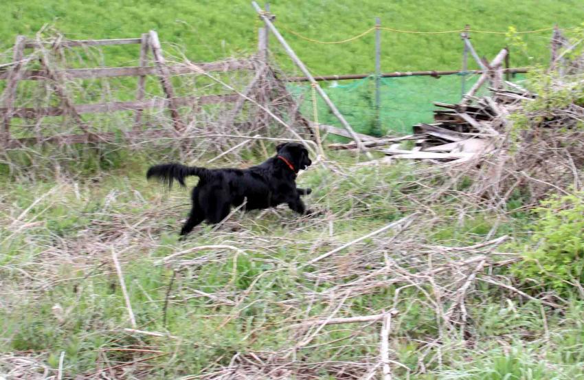 黒い犬(4)