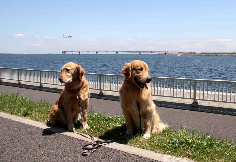 羽田の飛行機が見える公園で(4)