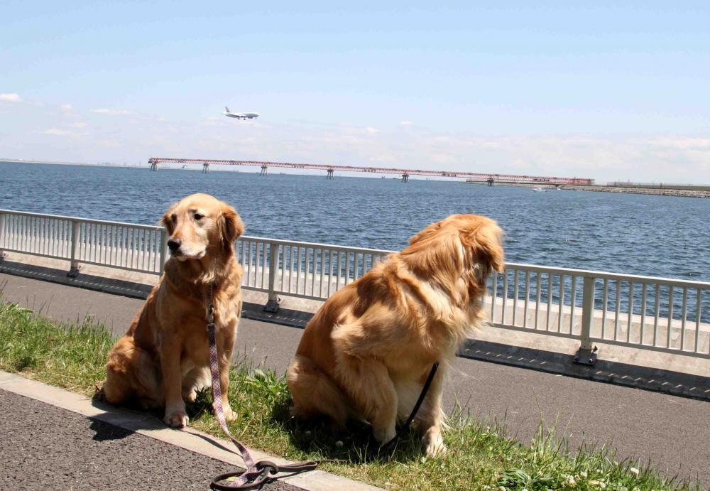 羽田の飛行機が見える公園で(5)