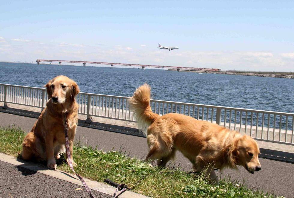羽田の飛行機が見える公園で(6)