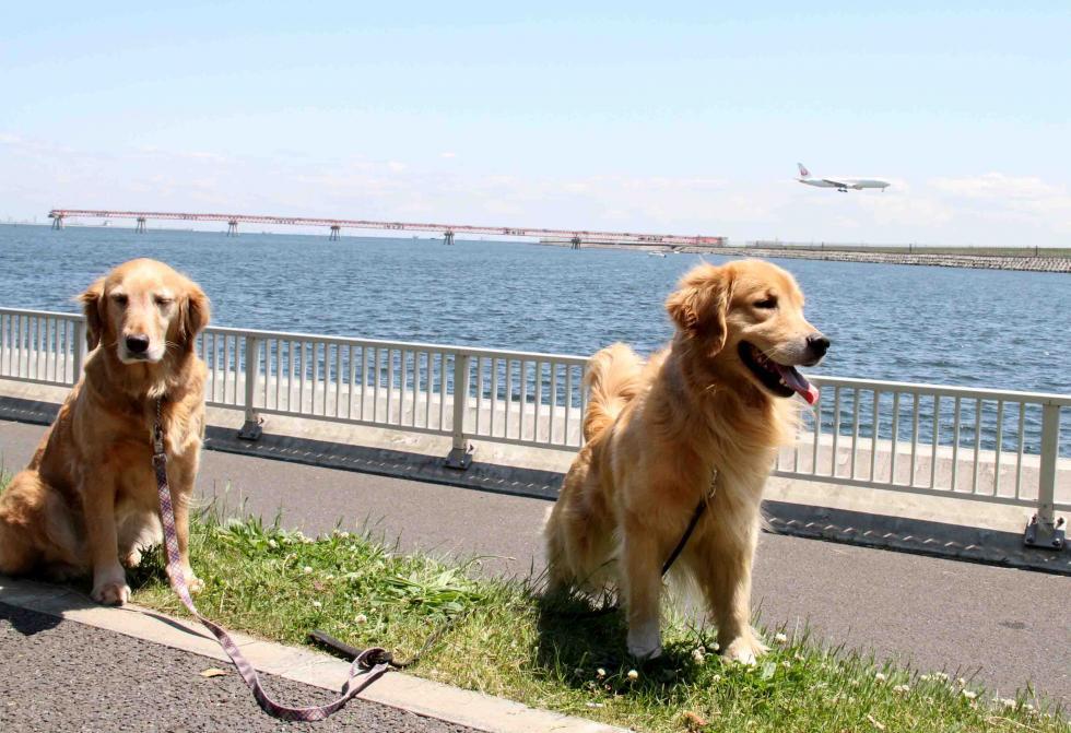 羽田の飛行機が見える公園で(7)