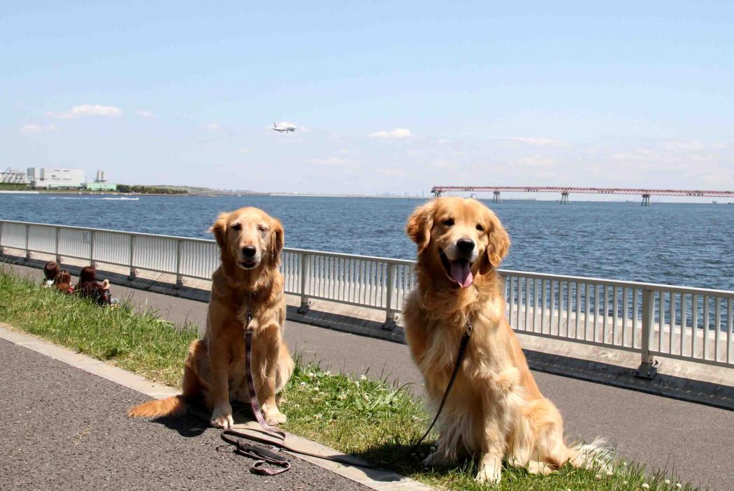 羽田の飛行機が見える公園で(8)