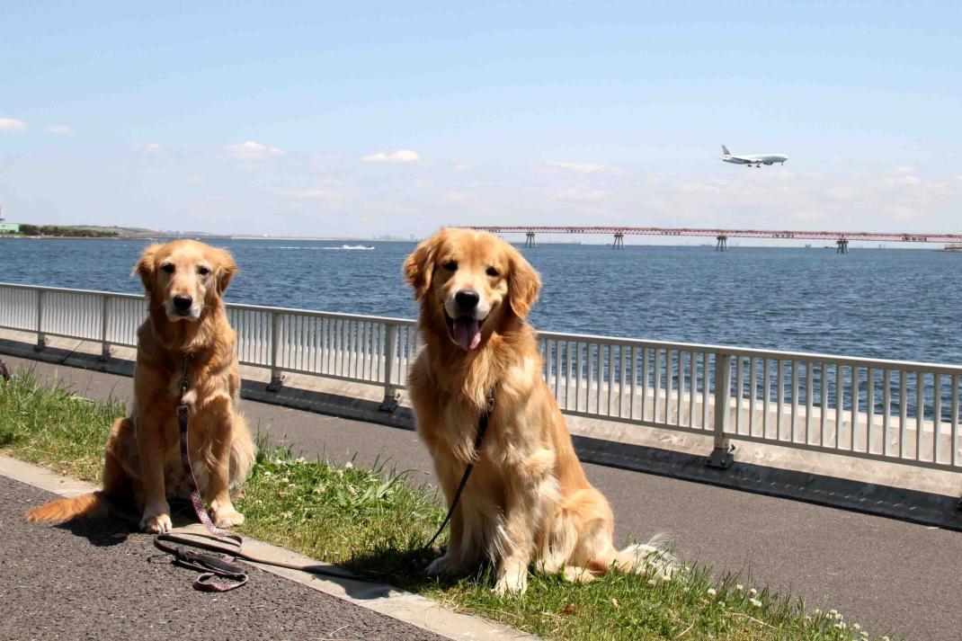羽田の飛行機が見える公園で(9)