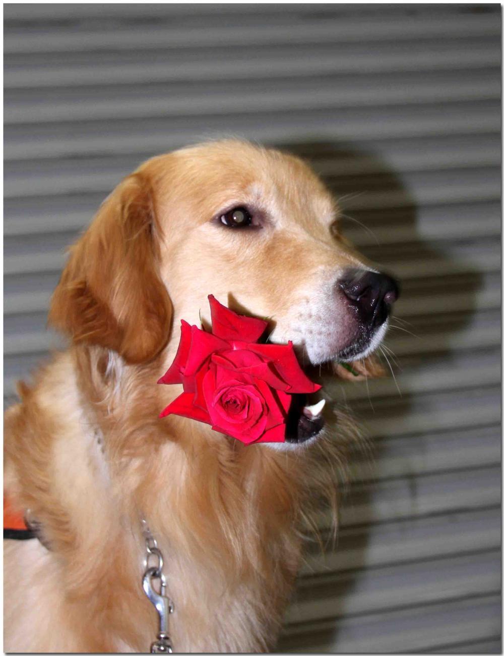 ヒットと赤いバラ