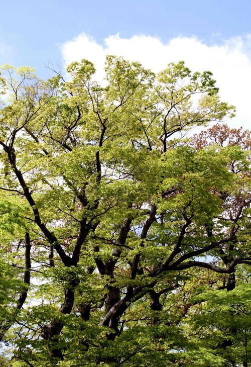 信州中野と長野(2)