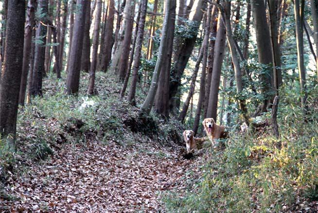 とある山中で 捜索訓練(1)
