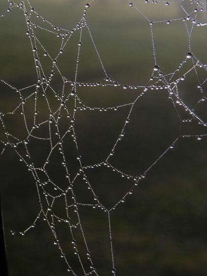 5クモの巣