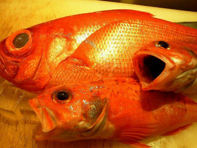 魚0704