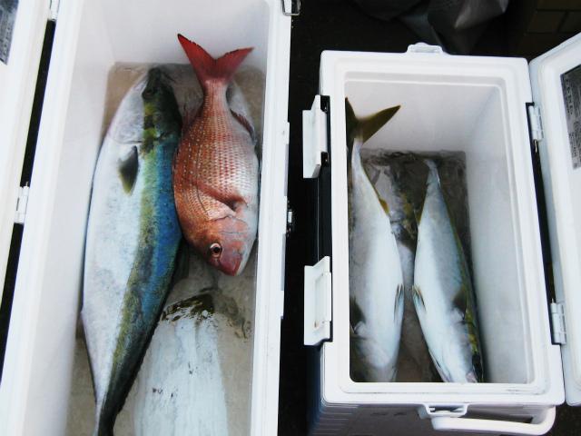 s関口さんの魚(2)