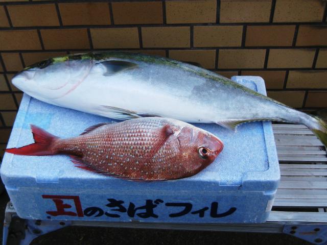 s関口さんの魚(1)