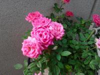 IMG_20130512_071022-S.jpg