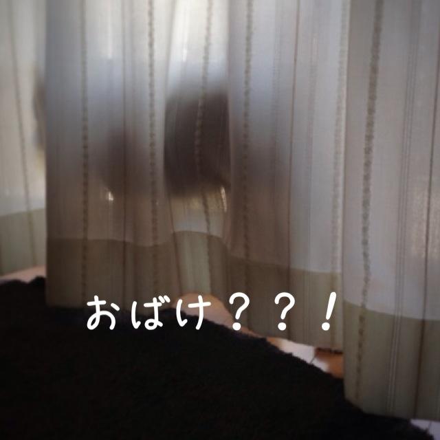 IMG_3241.jpg
