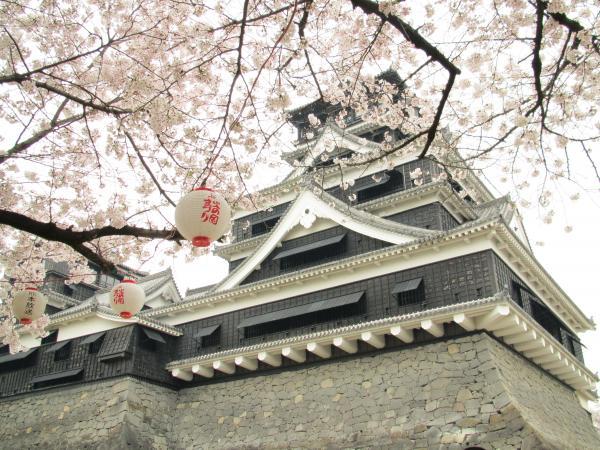 熊本城と桜3