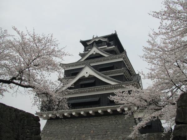 熊本城と桜2