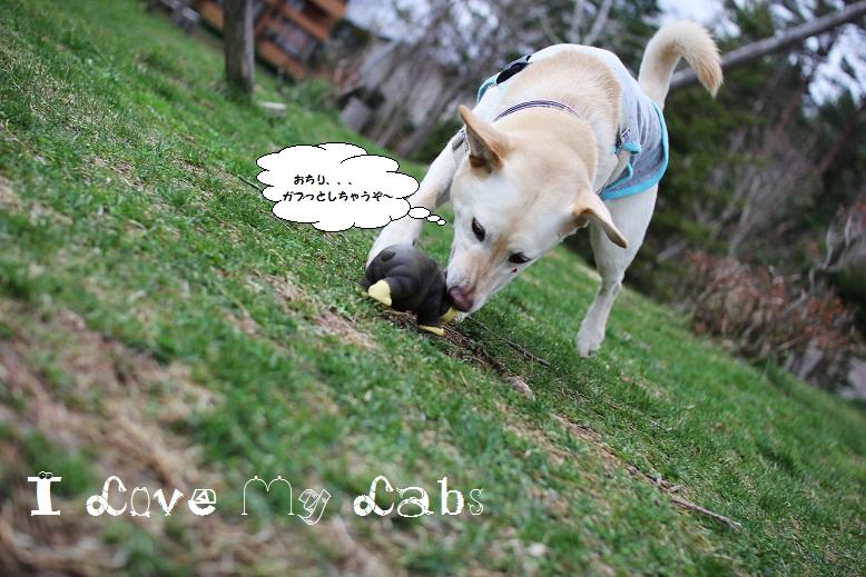 IMG_1105 (2)Woof April 6,2013