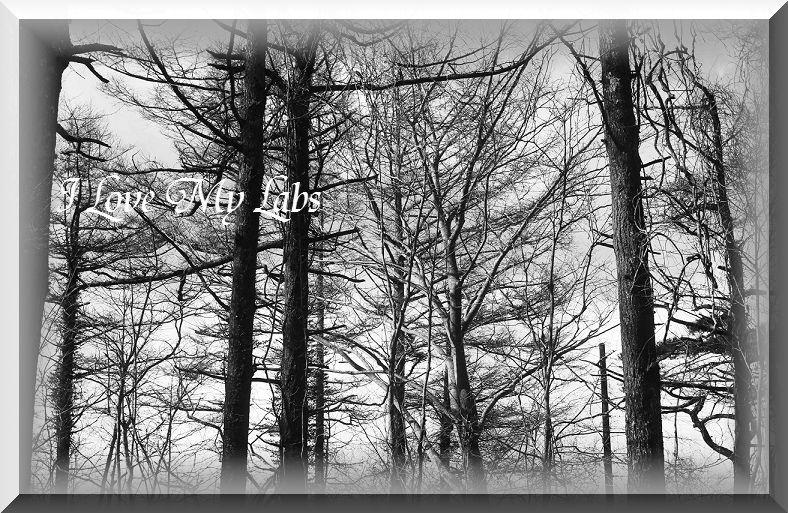 IMG_1219 (2)Woof April 7,2013