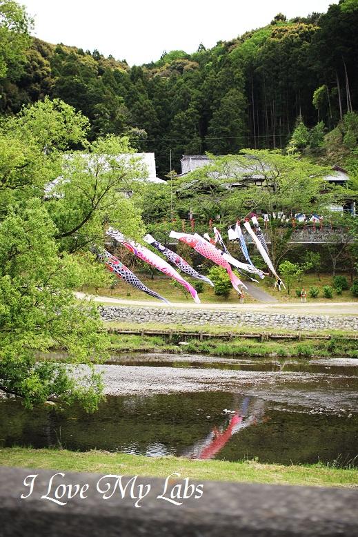 IMG_1517 (2)Haruna 2013-04-20