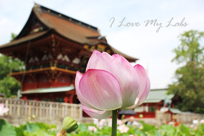 2013IMG_2473 (2)伊賀神社July