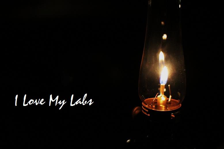 IMG_2900 (2)Millies Lab 2013