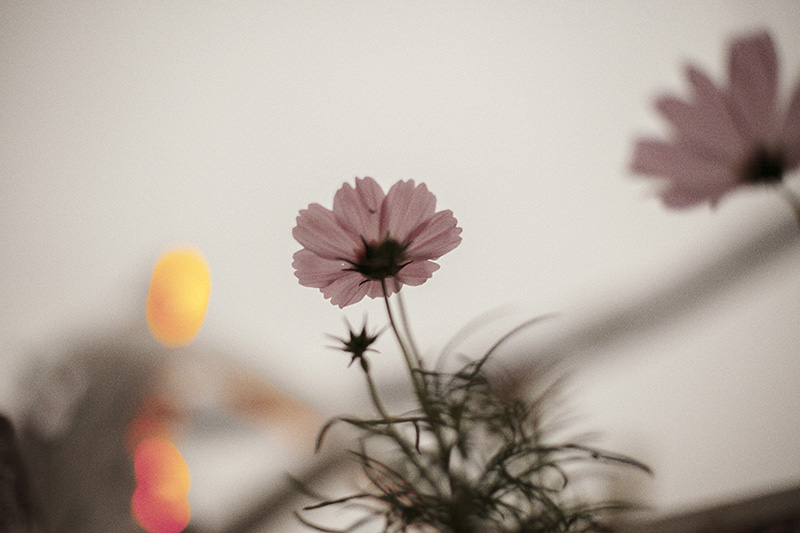 blog_MG_7825.jpg
