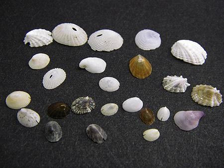 砂掘り結果08