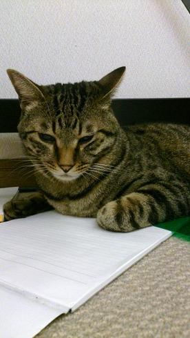 先住猫トビ君