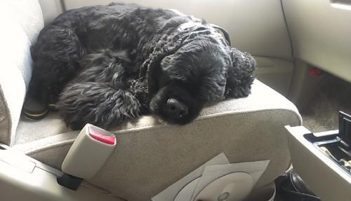 車内で寝るルーサ