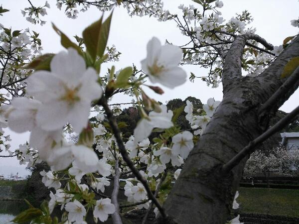 fc2_2013-04-05_10-25-21-774.jpg
