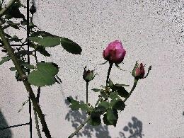 fc2_2013-04-18_10-21-42-937.jpg