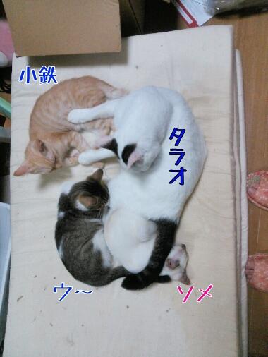 fc2_2013-08-11_22-45-01-795.jpg