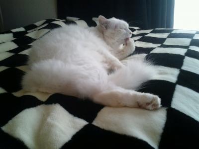 けづくろいon bed