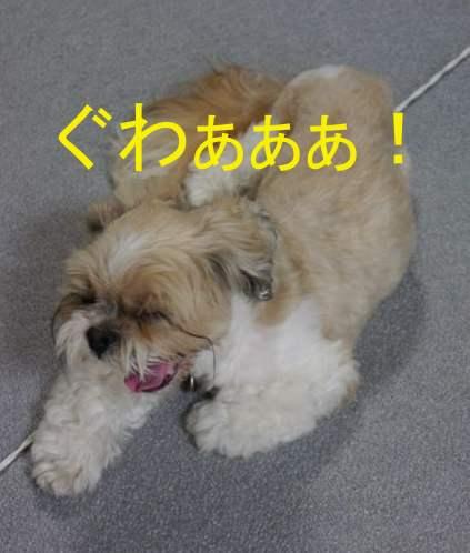 13072305_convert_1.jpg