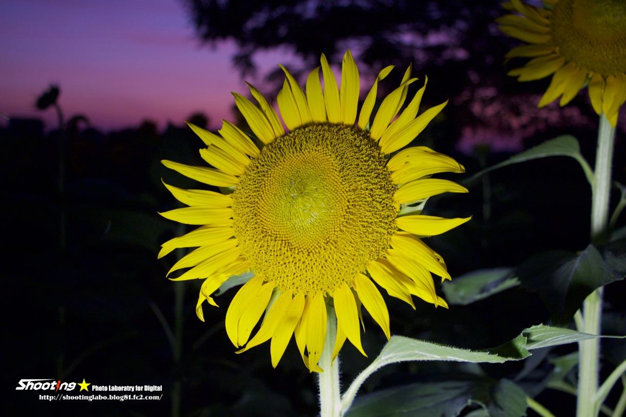 IMG_9506 - 2013-08-08 19-39-03