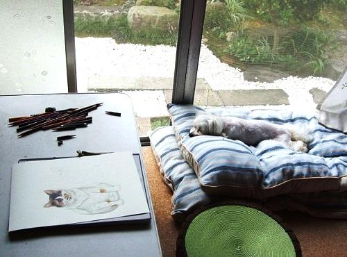 製作中のタマちゃんと寝そべるラン