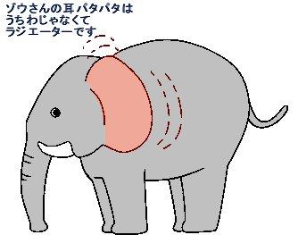 ゾウの耳パタパタはうちわではありません