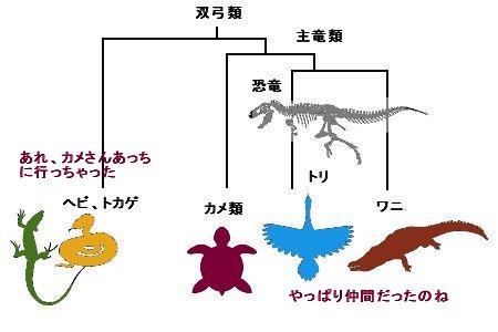カメさんの家系図