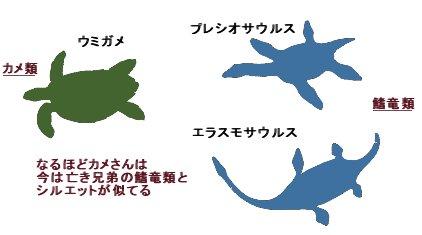 カメさんとプレシオサウルスはシルエットがそっくり!