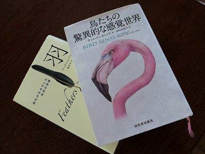 鳥と羽についての2冊の本downsize