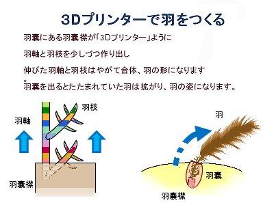 羽嚢3Dプリンターで羽を作る