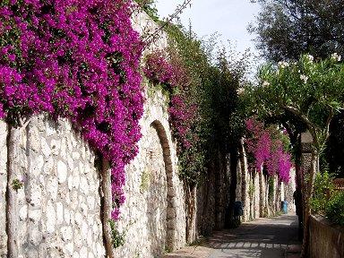 岬に向かうブーゲンビリアと石壁の小路downsize