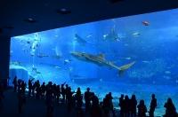 美ら海水族館(ジンベエザメの水槽)