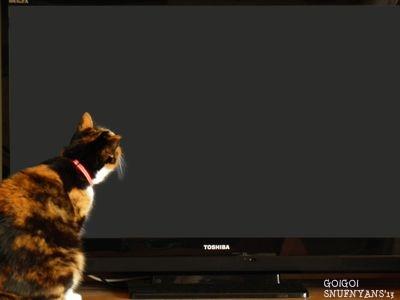 夜な夜な真っ暗なテレビの中を覗く猫