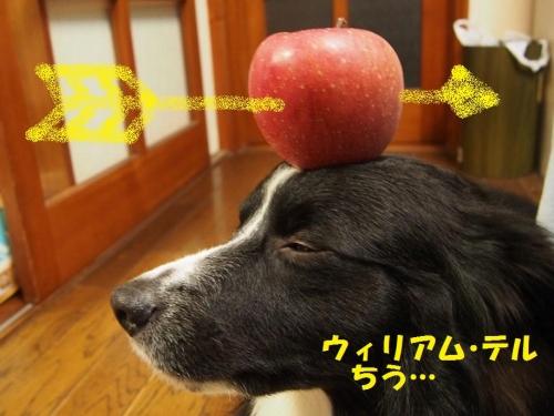 201401ringo_06.jpg