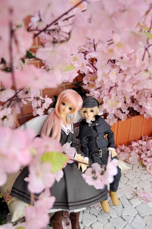 思い出の桜③