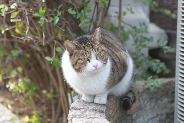 kyoukiji81.jpg