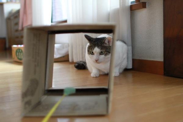 syoukori2.jpg
