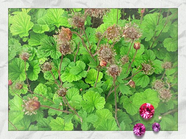 LINEcamera_share_2013-06-23-09-35-53.jpg